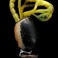 Insecta: Exopterygota