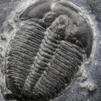 Earth: Paleontology