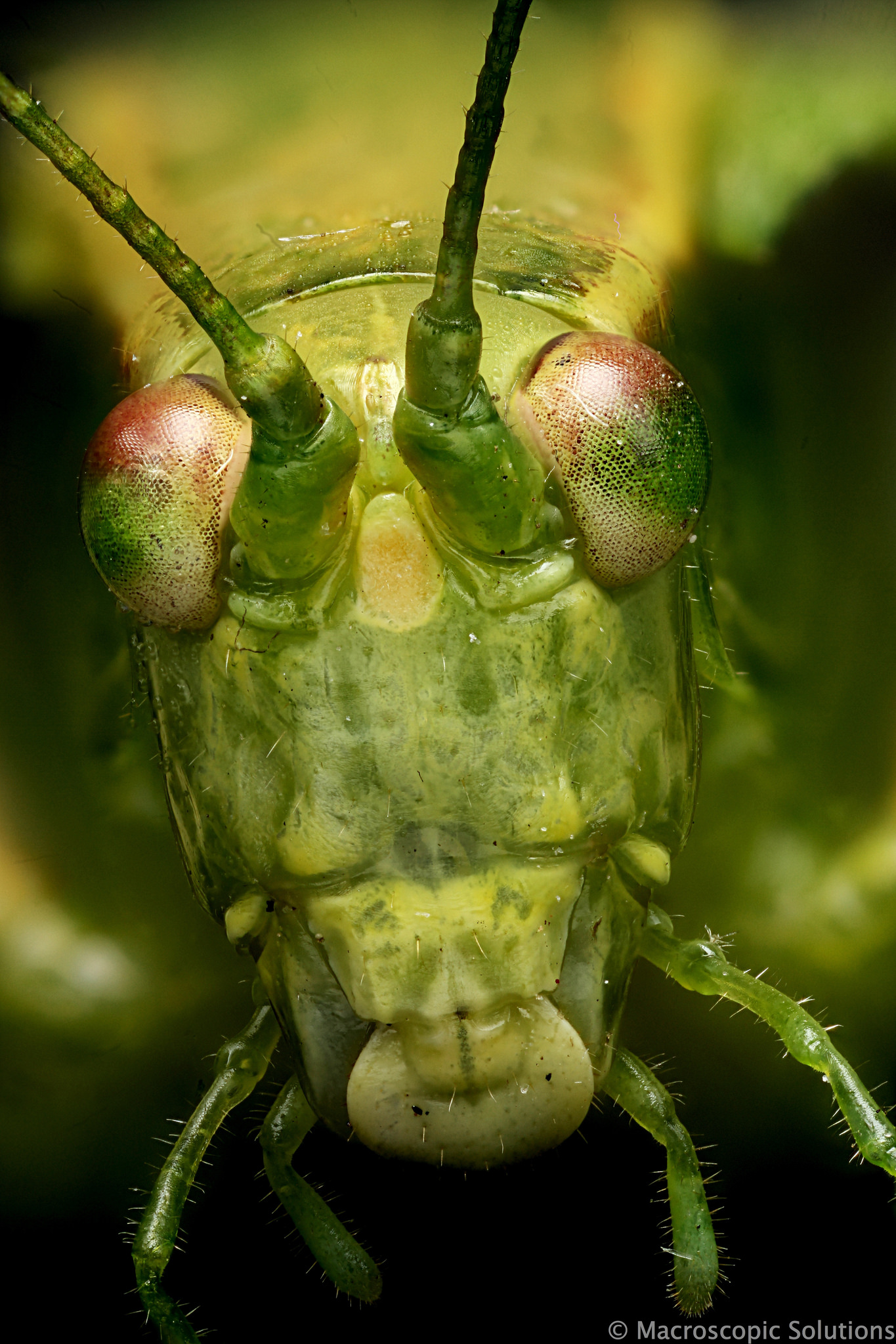 Insecta: Orthoptera