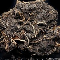 Earth: Soils