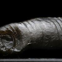 Annelida: Clitellata