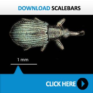 Scalebars