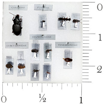 How man specimens can you fit into one sq. inch?   1x1 insect collection imaged at 1x.